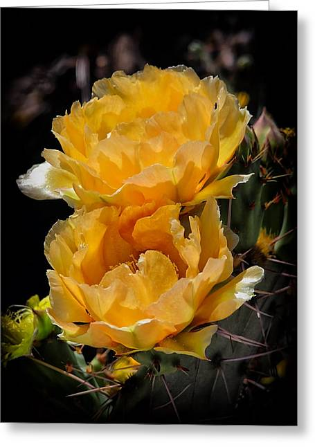 Spring In Arizona Greeting Card