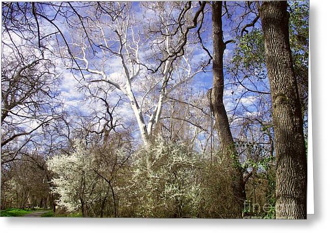 Spring In Bidwell Park Greeting Card
