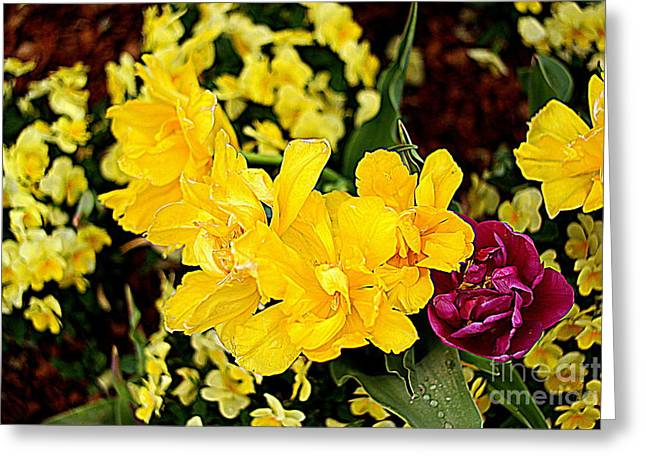 Greeting Card featuring the photograph Spring In Dallas by Diana Mary Sharpton