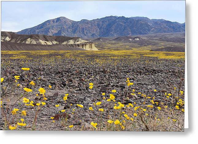 Greeting Card featuring the photograph Spring In Death Valley by Dung Ma