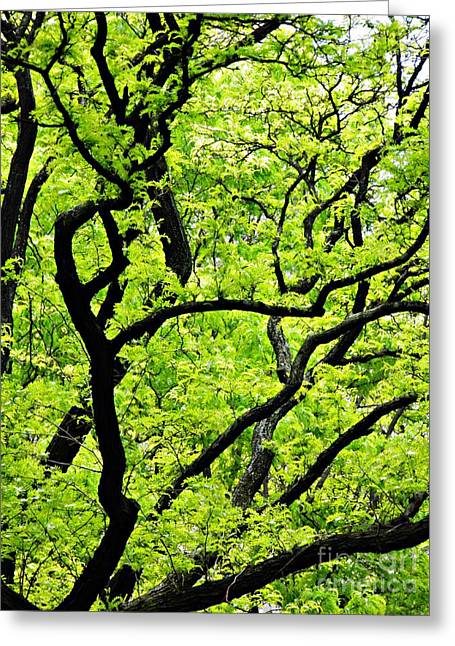Spring In Green And Black    Greeting Card
