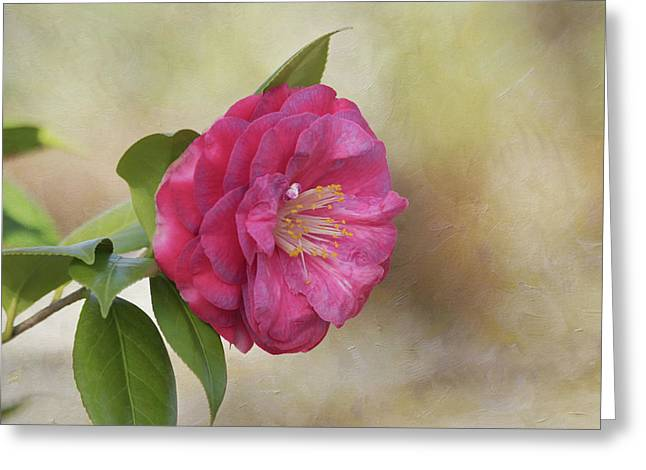 Greeting Card featuring the photograph Spring In Savannah by Kim Hojnacki