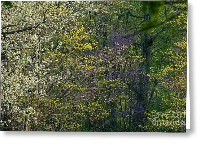 Spring In Southern Forrest Greeting Card