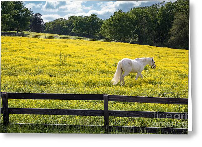 Spring In Tennessee Greeting Card by Bob Hemphill
