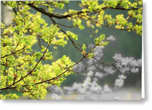 Spring In The Arboretum Greeting Card