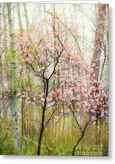 Spring In The Forest Greeting Card