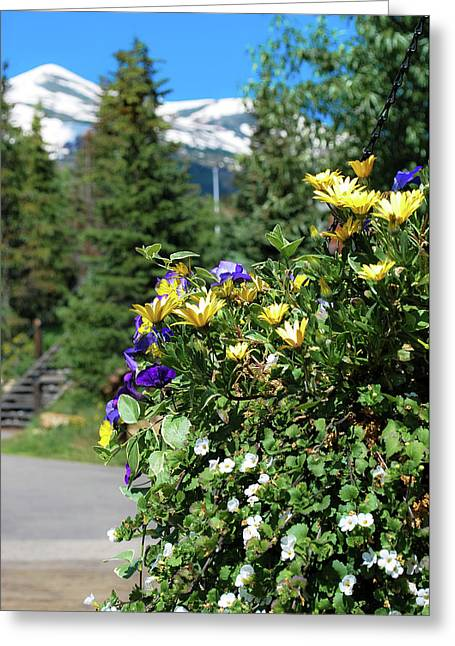 Spring In The Mountains - Colorado Greeting Card by Gregory Ballos