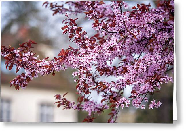 Spring In Town Greeting Card by Jenny Rainbow