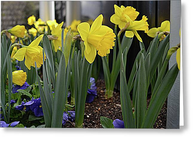 Spring In Yellow Greeting Card by Larry Bishop