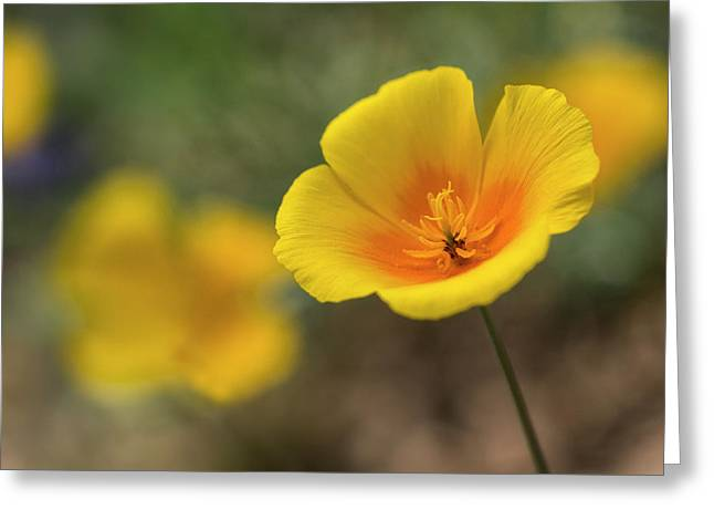 Greeting Card featuring the photograph Spring Is Beckoning  by Saija Lehtonen