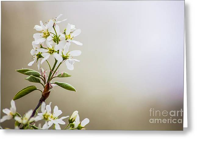 Spring Is Bursting Out All Over Greeting Card by Wayne Moran