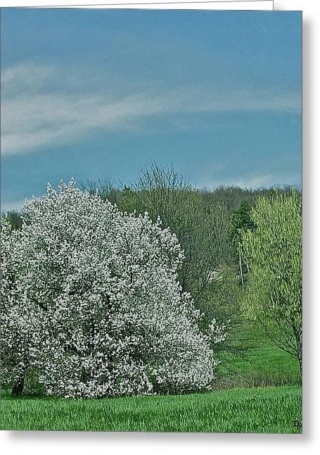 Spring Is Here Greeting Card by Debra     Vatalaro