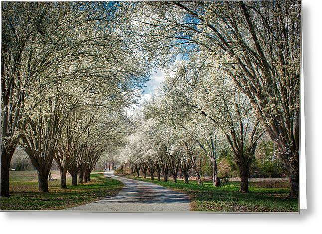 Greeting Card featuring the photograph Spring Is Here by Mark Guinn