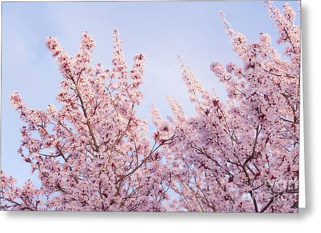 Greeting Card featuring the photograph Spring Is In The Air by Ana V Ramirez