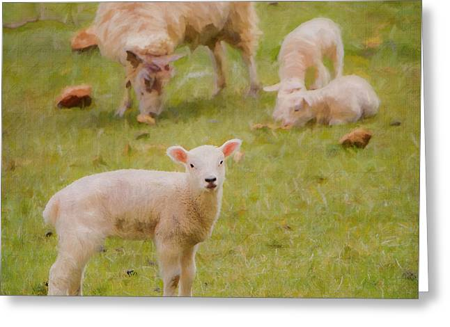 Greeting Card featuring the photograph Spring Lamb by Bellesouth Studio