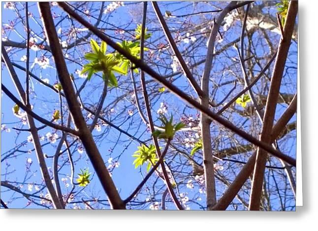Spring Leaves #seasons #trees Greeting Card
