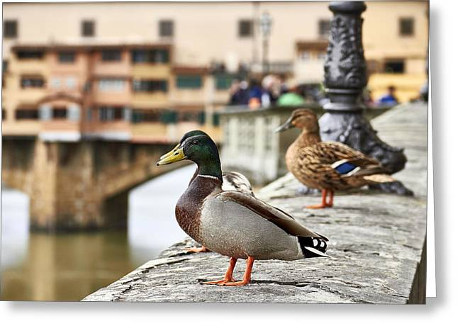 Spring Love Ducks Greeting Card