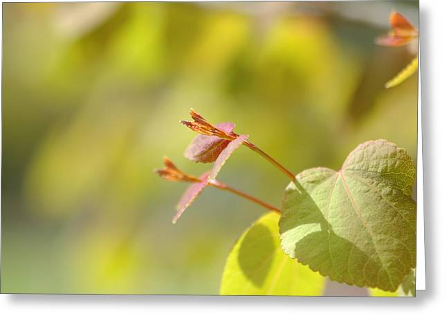 Greeting Card featuring the photograph Spring Macro2 by Jeff Burgess