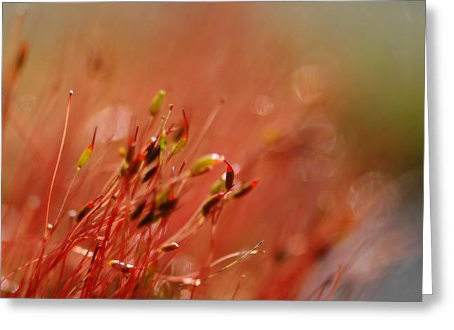 Greeting Card featuring the photograph Spring Macro3 by Jeff Burgess