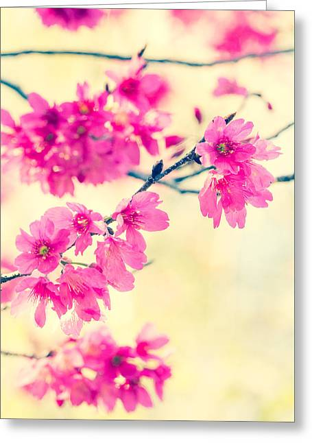 Greeting Card featuring the photograph Spring Magic by Julie Andel