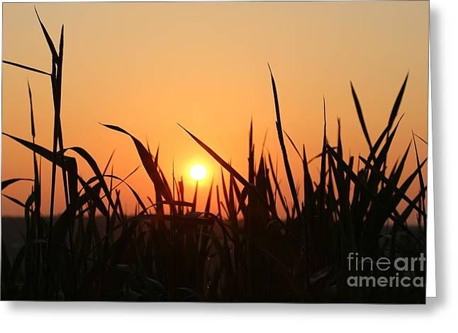 Spring Meadow Sunrise Greeting Card