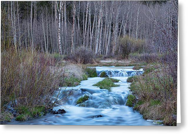 Spring Melt Off Flowing Down From Bonanza Greeting Card by James BO Insogna