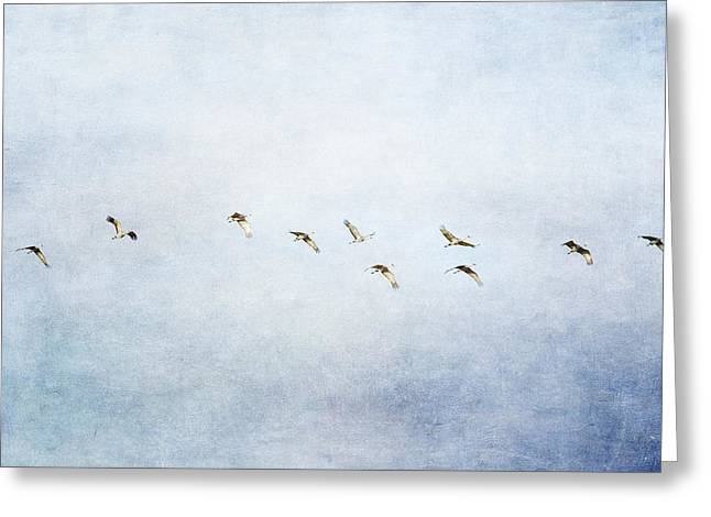 Spring Migration 2 - Textured Greeting Card