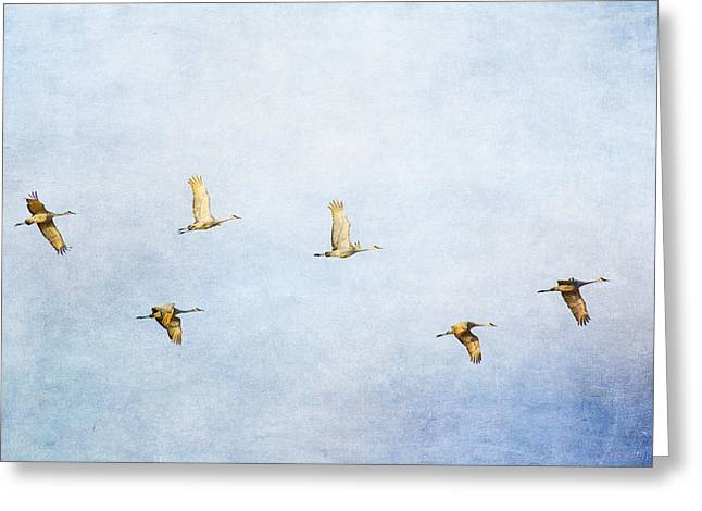 Spring Migration 3 - Textured Greeting Card