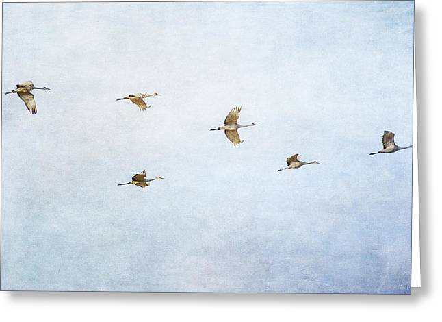 Spring Migration 4 - Textured Greeting Card