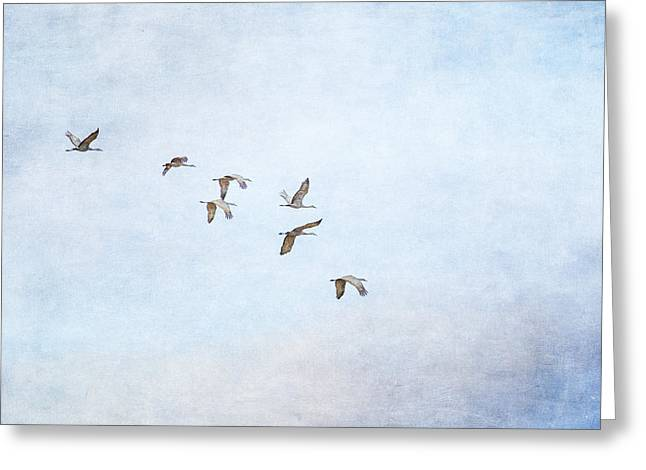 Spring Migration - Textured Greeting Card