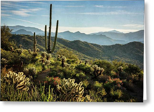 Greeting Card featuring the photograph Spring Morning In The Sonoran  by Saija Lehtonen