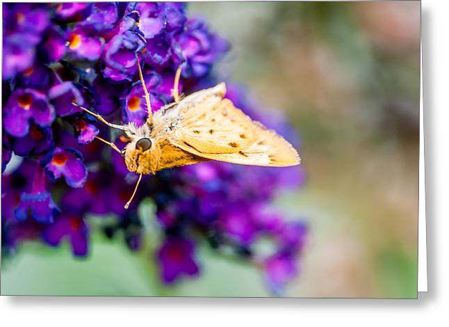 Spring Moth Greeting Card