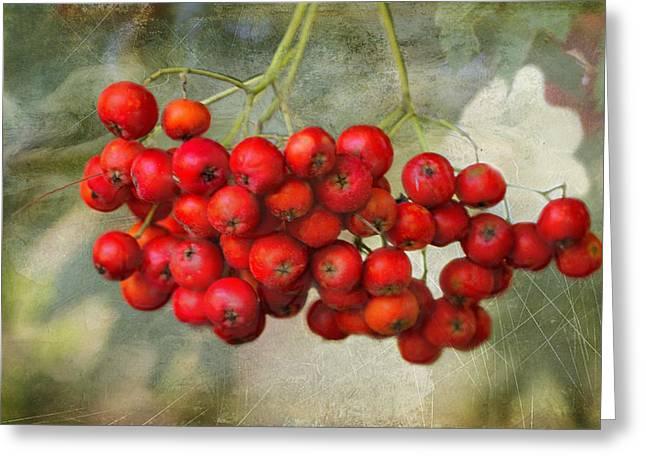Spring Mountain Ash Berries  Greeting Card