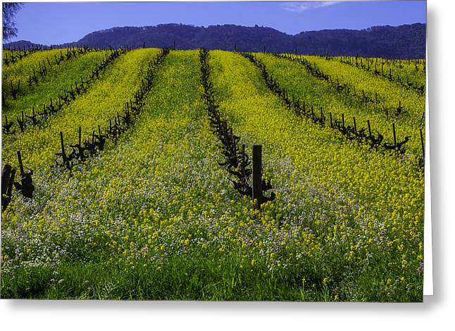 Spring Mustard Field Greeting Card