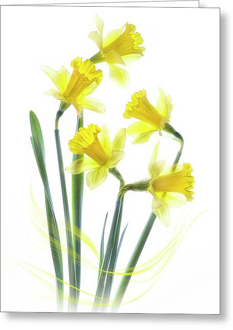 Spring Narcissus Greeting Card by Jacky Parker