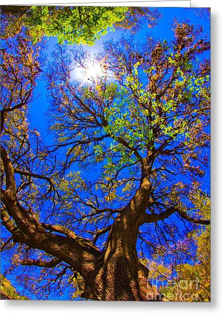 Spring Oak Greeting Card