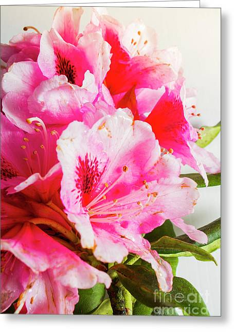 Spring Of Flower Bouquets Greeting Card by Jorgo Photography - Wall Art Gallery