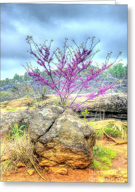Spring On Devils Den Greeting Card by Paul W Faust - Impressions of Light