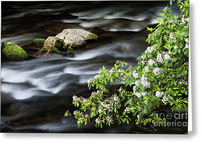 Greeting Card featuring the photograph Spring On The Oconaluftee River - D009923 by Daniel Dempster