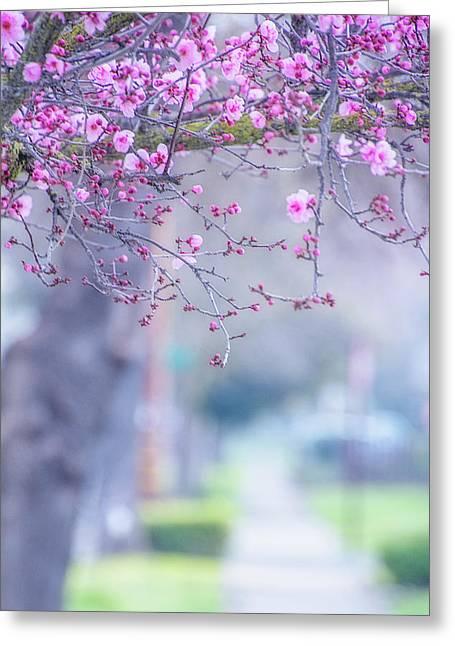 Spring On Vine Street Greeting Card by Terry Davis