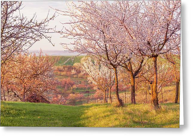 Spring Orchard With Morring Sun Greeting Card by Jenny Rainbow