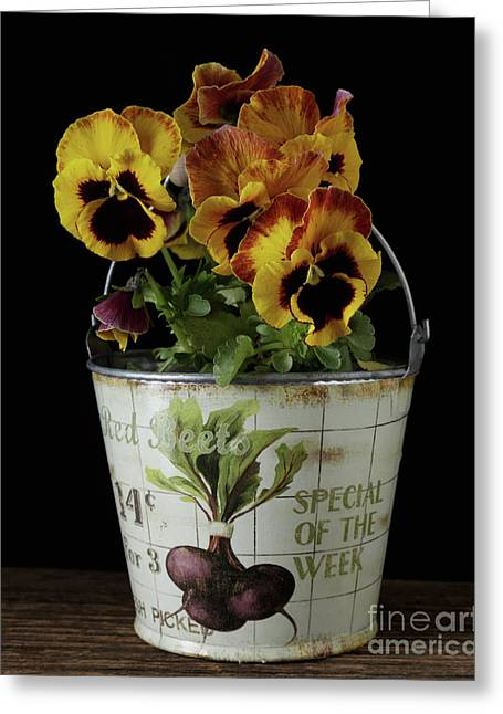 Spring Pansy Flowers In A Pail Greeting Card by Edward Fielding