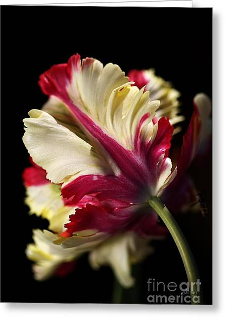 Spring Parrot Tulip Greeting Card