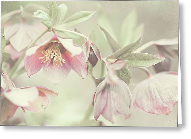 Spring Pastels Greeting Card by Jenny Rainbow