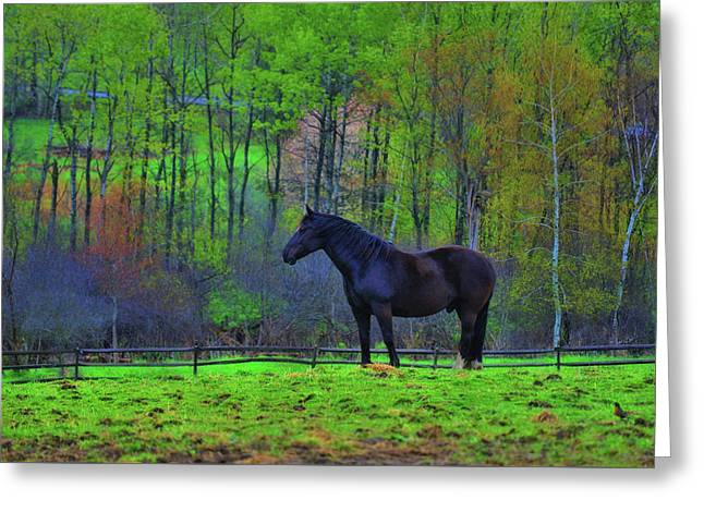 Spring Pasture Greeting Card by JAMART Photography