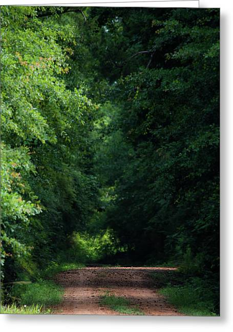 Spring Path Of Light Greeting Card by Shelby Young