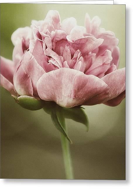 Spring Peony Greeting Card by Tracy  Jade