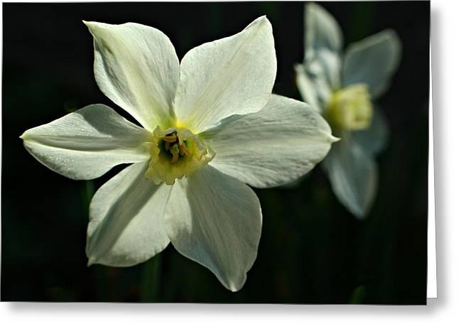 Spring Perennial Greeting Card
