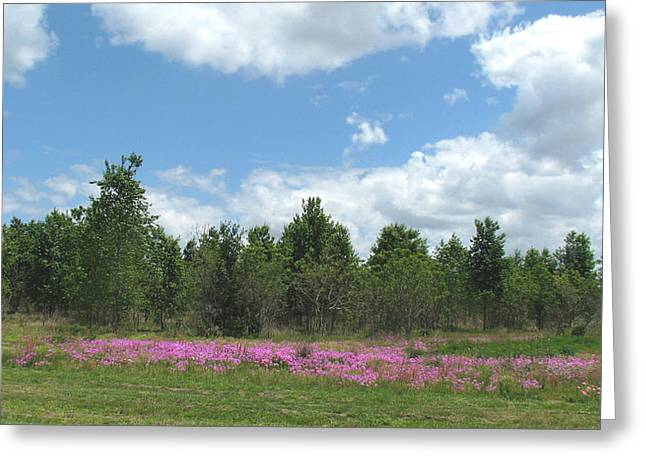Greeting Card featuring the photograph Spring Phlox by Peg Urban