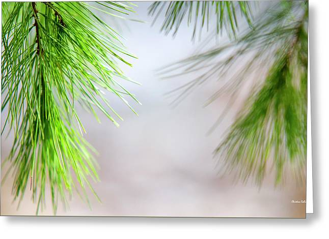 Greeting Card featuring the photograph Spring Pine Abstract by Christina Rollo